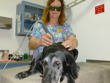 Laser Treatment | Shasta Lake Veterinary