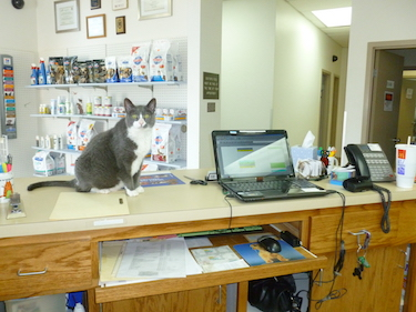 Low Cost Clinic | Shasta Lake Veterinary