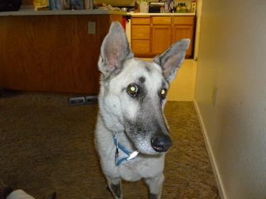 Web Links | Shasta Lake Veterinary